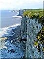 TA1974 : Bempton Cliffs by Paul Buckingham
