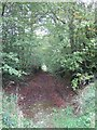 SS9423 : Public footpath (old track) by David Smith