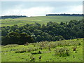 SK2066 : Countryside view across Lathkill Dale by Andrew Hill