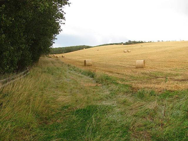 Round bales, Branxton