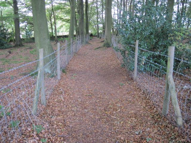 Footpath through wood near Lant Lodge Farm