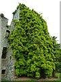 NX1160 : Castle Kennedy by Andy Farrington