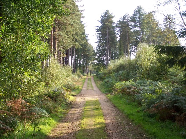 Forest track, Deerleap Inclosure