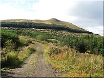 NS6781 : Carron Valley Forest by Richard Webb