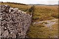 SD4487 : Drystone Wall Whitbarrow Scar by Martin