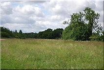 TQ5584 : Bonnett's Wood by N Chadwick
