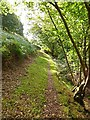 ST1139 : The Quantock Greenway above Bicknoller by Oliver Dixon
