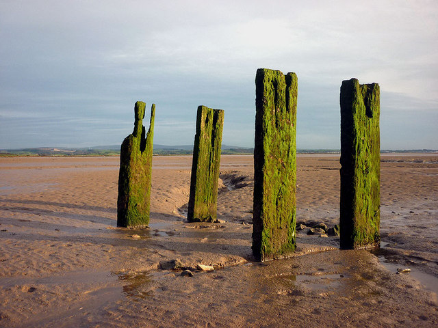 Posts in the mud, Jenny Brown's Point