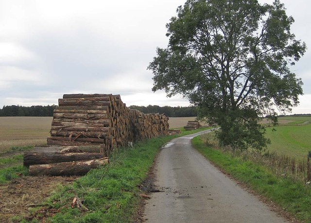 Felled timber by the Centenary Way