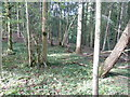 TQ1722 : Mixed woodland trees on the edge of Freeman's Wood by Dave Spicer