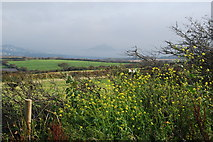 SW5129 : Cornish hedges, with St Michael's Mount in the distance by hayley green