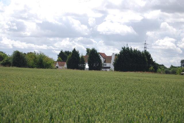 Great Sunning across a wheat field