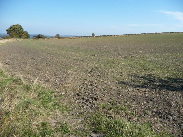 Large bare field, Crab Tree Hill