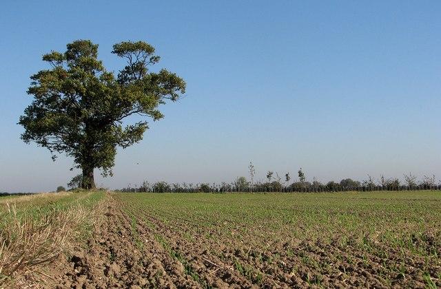 Fenland field