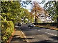 SJ8687 : Cheadle Road (A5149) by David Dixon
