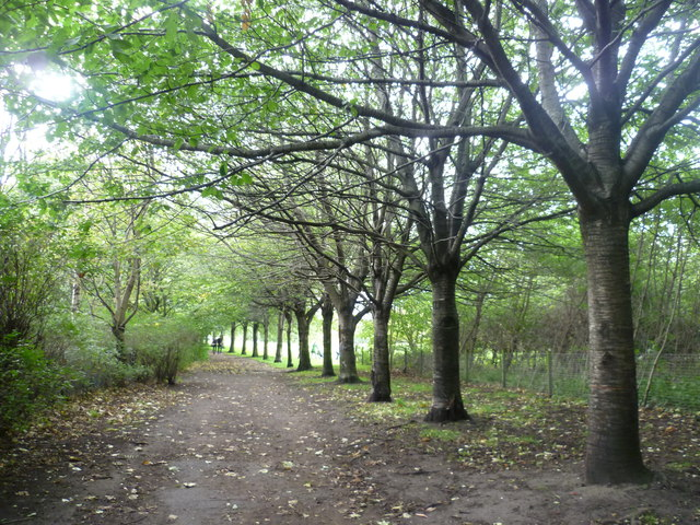 Tree-lined pathway in St. Mark's Park by kim traynor