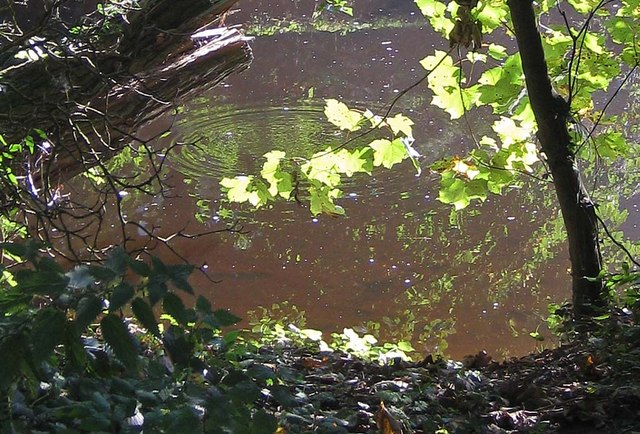 A splash in the river