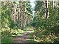 SK8455 : Stapleford Woods by Richard Croft