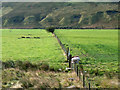 NY3432 : Fields of Caldew valley separated by fence by Trevor Littlewood