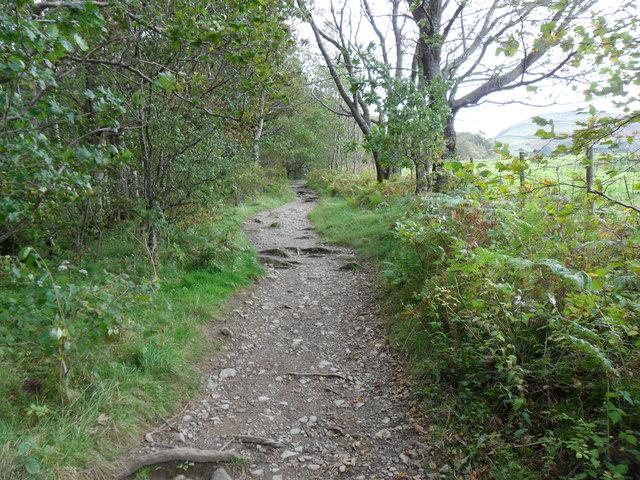 Footpath, Springs Wood.