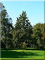 ST7475 : Perry pear trees, Nichols Orchard, Dyrham Park by Brian Robert Marshall