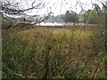 NO5351 : Balgavies Loch Wildlife Reserve by M J Richardson