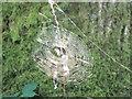 ST8222 : Spider's web by Jonathan Kington