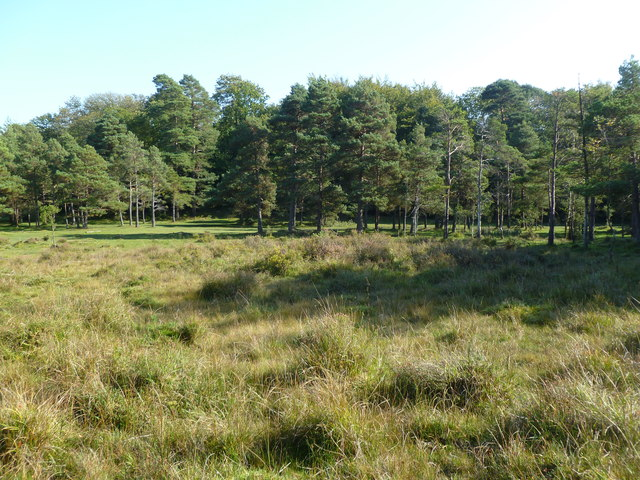 Holmsley Walk, wetland