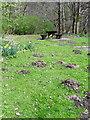 NN9557 : Molehills, Black Spout Wood by Maigheach-gheal