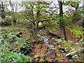 SD7517 : Quarlton Brook by David Dixon