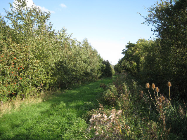 Southwest edge of Ellen's Wood