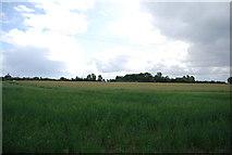 TQ5885 : Farmland south of Ockendon Rd by N Chadwick