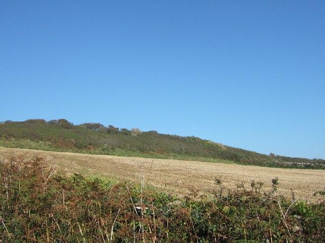 Hedge on raised cliff