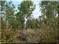 SK6834 : Triangular plantation by Alan Murray-Rust
