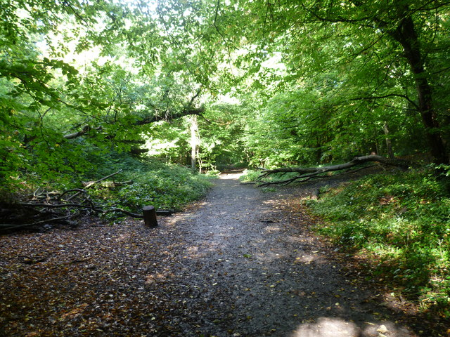 Trackbed of the old railway through Sydenham Hill Woods