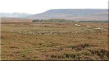 SE4996 : Whitestones Ridge by Richard Webb