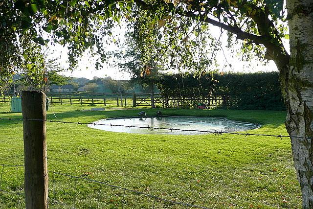 Pond at Frogmill Farm