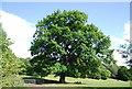 SP0682 : Oak tree, Cannon Hill Park by N Chadwick