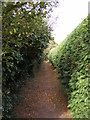 TM2839 : Footpath to Alley Road by Adrian Cable
