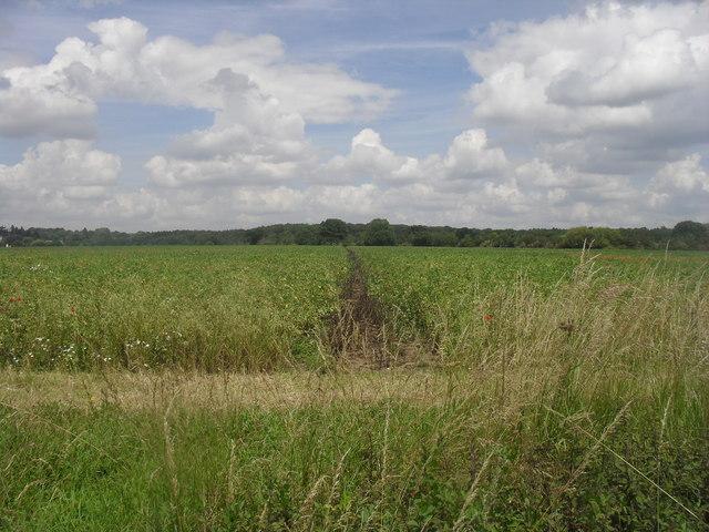 Footpath to Bayworth