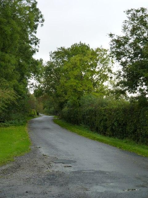 Leafy roadway