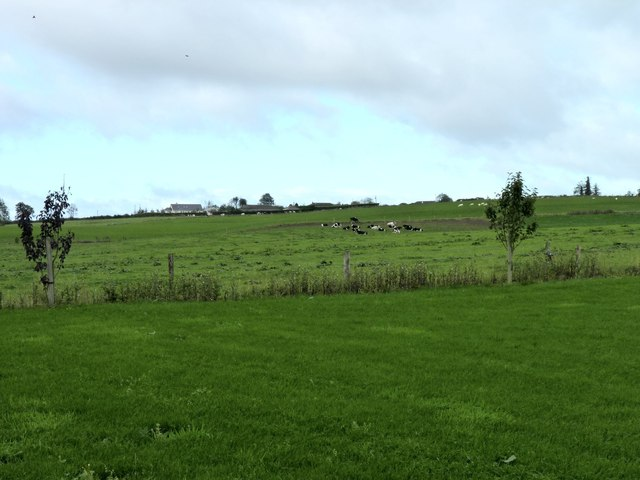 Cattle by the farm