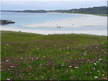 NB0936 : Machair Above Berie Sands by Colin Smith