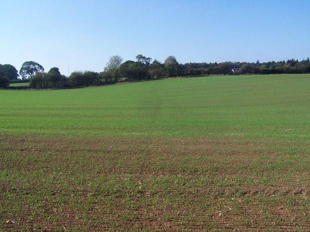 Footpath From Brockhurst Farm