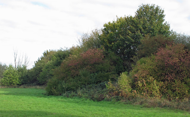 Early autumn colours on field boundary