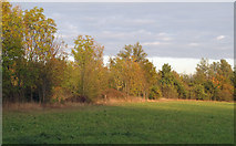 TQ5782 : Late afternoon sun on field boundary by Roger Jones