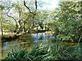 SO5398 : Duck pond at High Fields farm by Richard Law