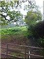 SS9510 : Field beside Garlands Lane by David Smith