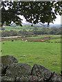 SE6998 : Cattle grazing in Rosedale by Pauline E