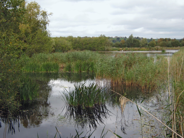 The Decoy Pool, Westhay Moor Nature Reserve
